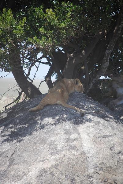 Serengeti (182).JPG