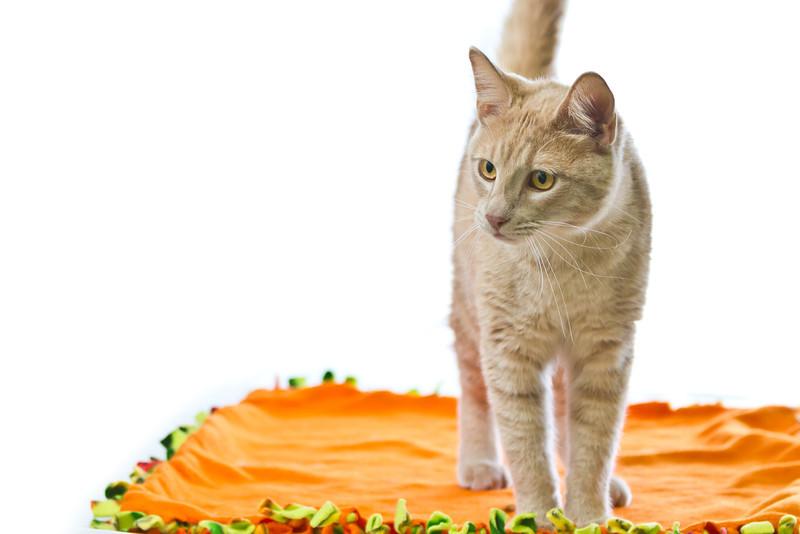 1202_Cats_251.jpg
