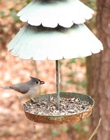Birds 20080120 20080124