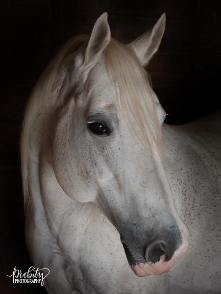 Dark Horse Series