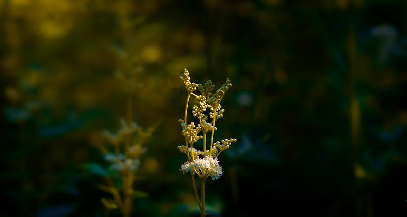 The Magic of Light-418.jpg