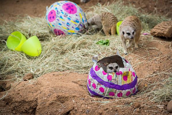Easter Enrichment