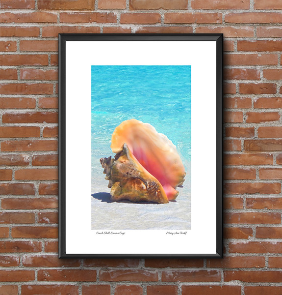 Conch Shell Image.jpg
