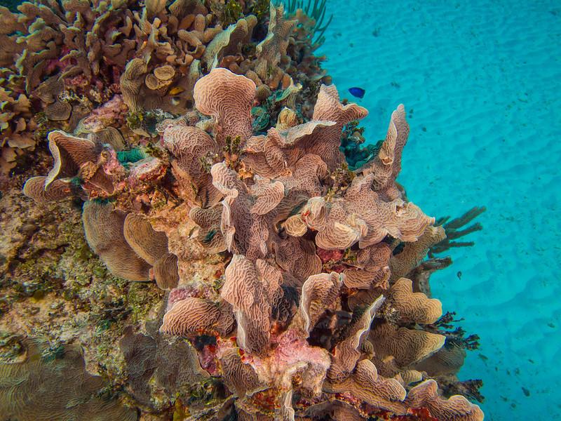 Tulum Trip - Diving 20130405-17-56 _405264304.jpg