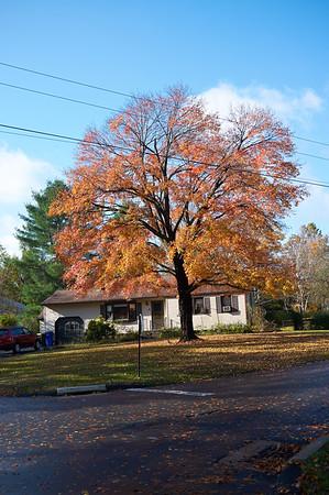 Foliage_Oct. 20, 2012