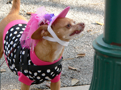 Easter Bonnet Dog Parade 2005 -- Delray Beach, FL