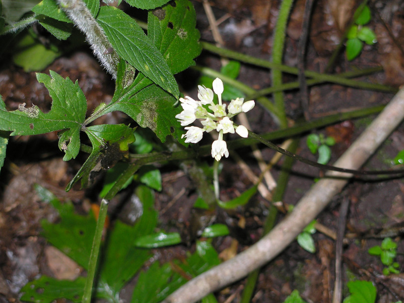 Close up of wild flower in the woods