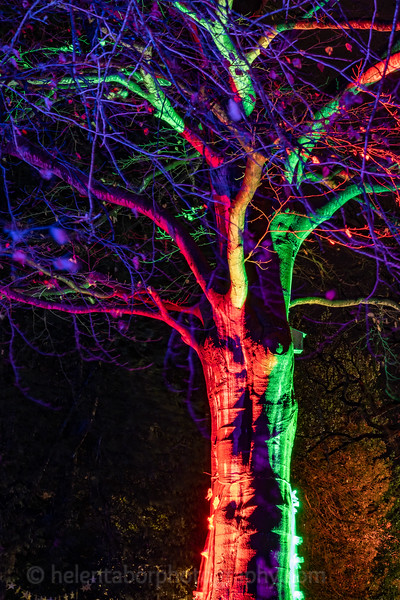 Illuminated Winter Wonderland by night-25.jpg