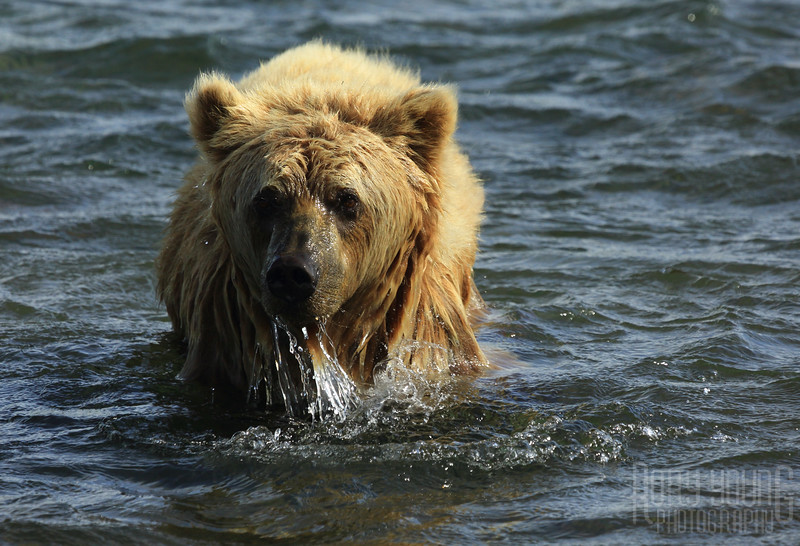 Alaska0106-A.jpg
