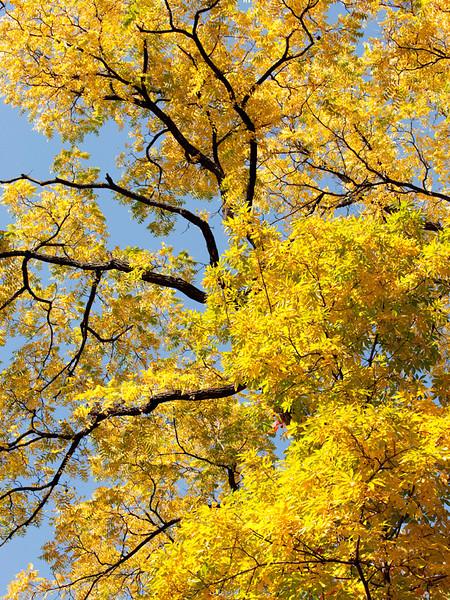 clip-015-tree_autumn-dsm-02oct12-001-8499.jpg