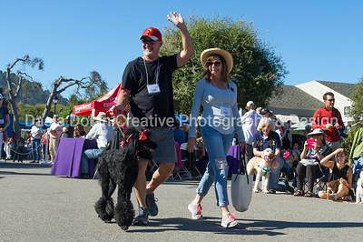 Parade-standard poodles #701-858