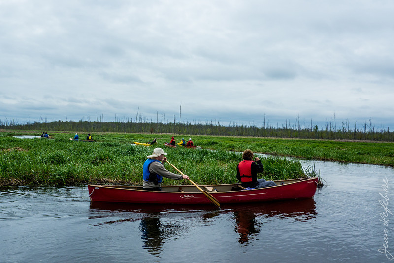 Minesing_Swamp_May2013 (156 of 263)