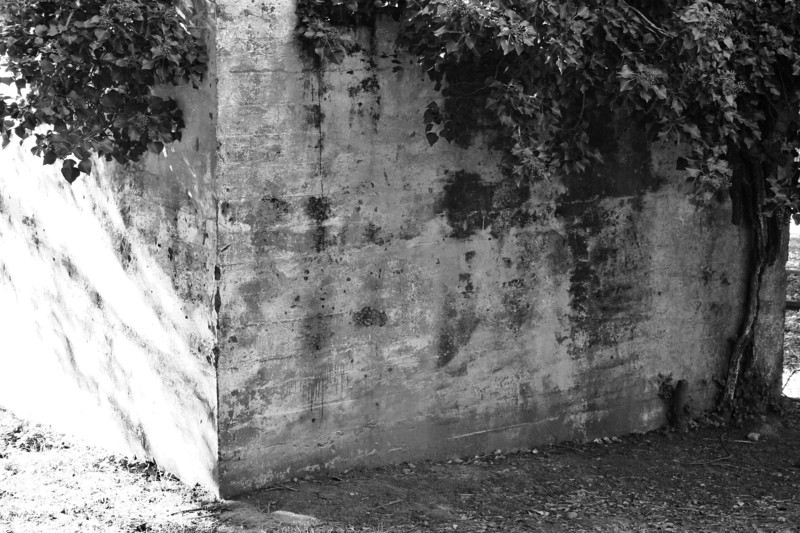 071226-002BW (Abstract; Ivy, Outbuilding, Joaquin Miller Park, Oakland, CA).jpg