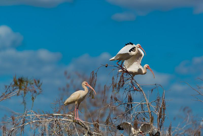 Everglades (39 of 60).jpg