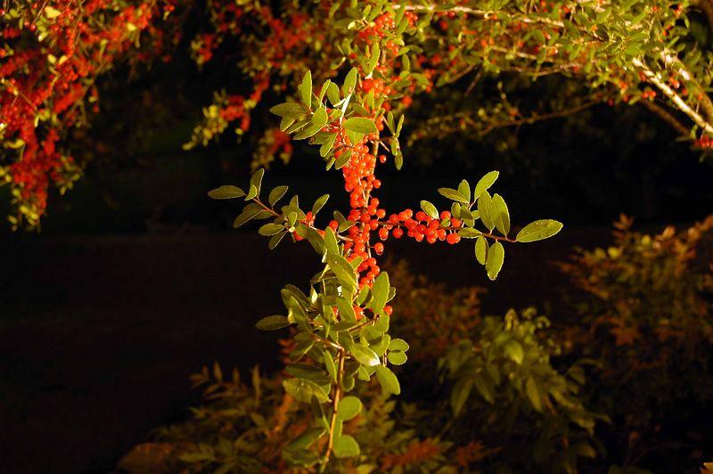 flower070.jpg