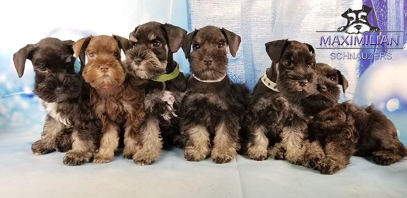 Hettie Pups 016.jpg