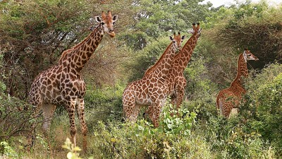 Bandia Reserve; Senegal; SN;