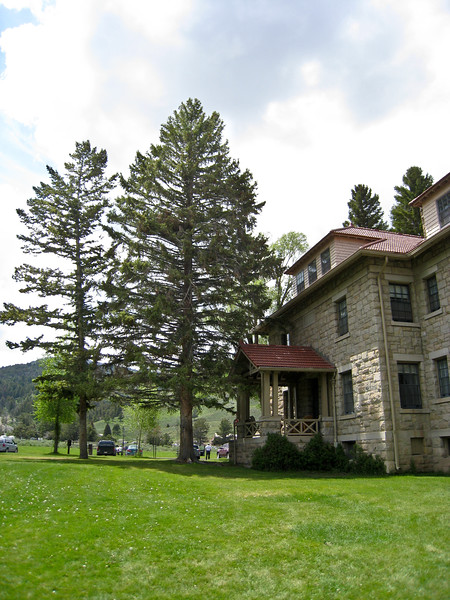 Home at Fort Yellowstone in Mammoth.  There is an owl family living in that tall tree.