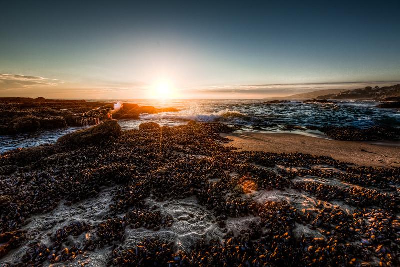 AlikGriffin_Laguna_Mussel_Beach.jpg