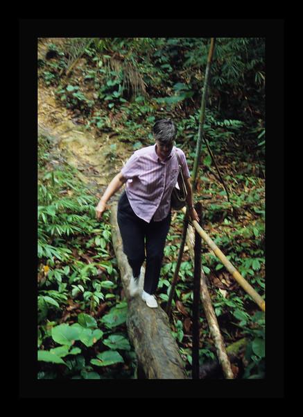 Log Bridge in Borneo - 1989.jpg