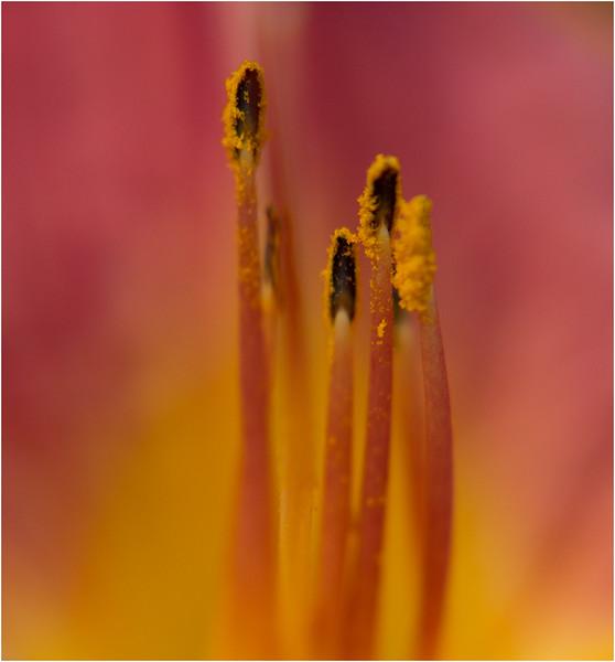 inside flower.jpg