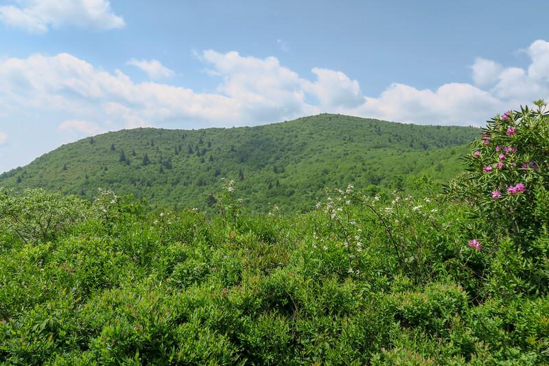 Graveyard Ridge Trail -- 5,620'