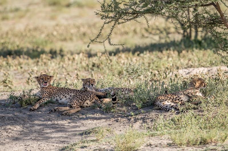 Tanzania_Feb_2018-65.jpg