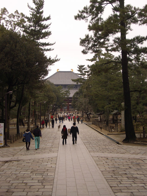 Walk to the Todaiji.  Notice the deer intermingling with the people.