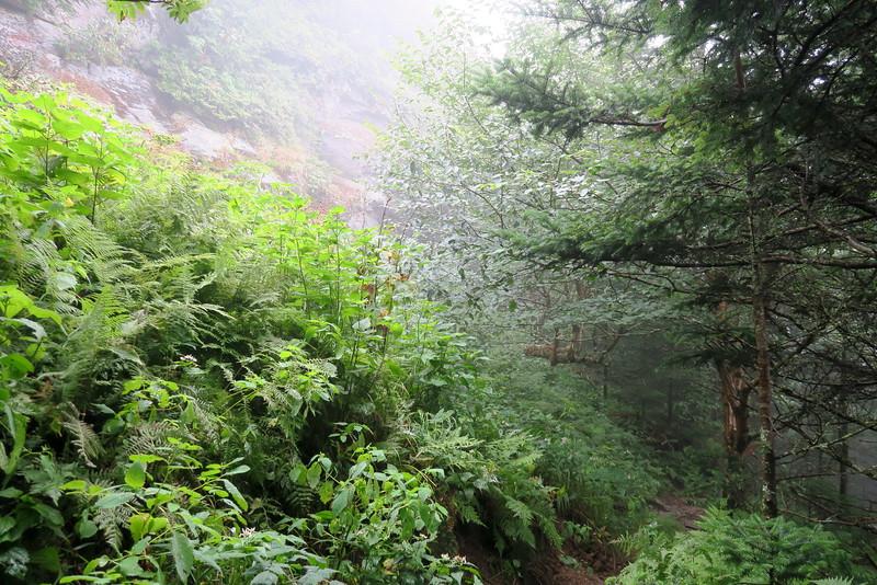 Grandfather Trail -- 5,620'