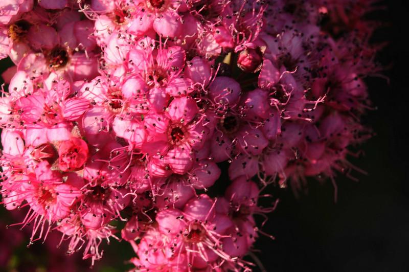 flowers_20080714-031.jpg