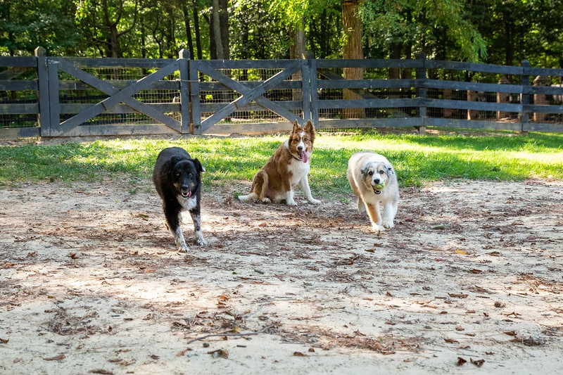 Jazzy and friends dogs take 2 with Nicky (61).jpg