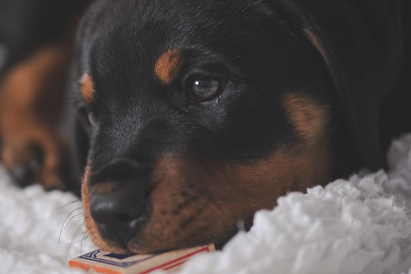 JLS_Pet Photography_033.jpg