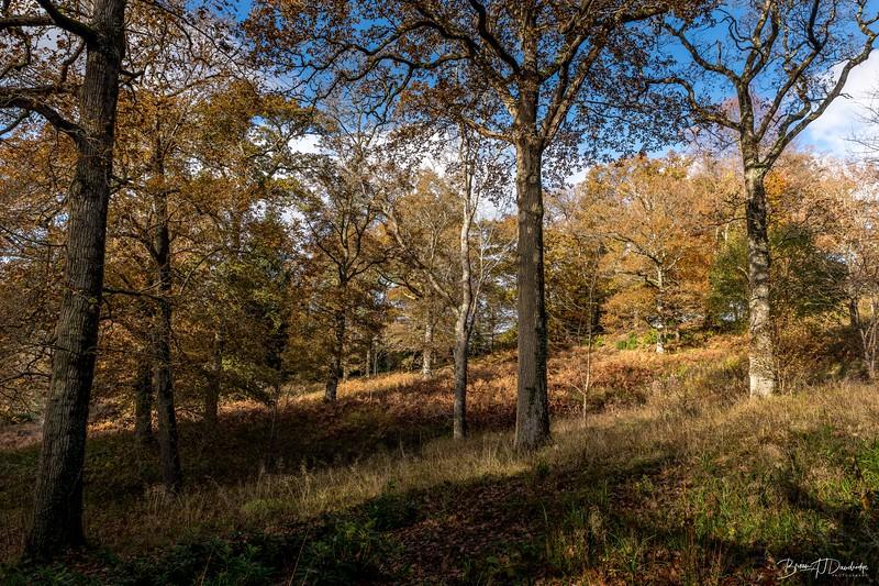 Wakehurst_Autumn-6118.jpg