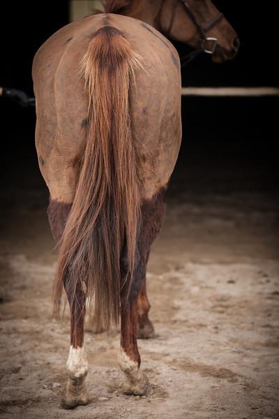 Sara Kirby Sales Horses