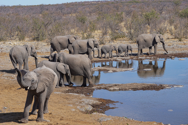 ETOSHA - NAMIBIA