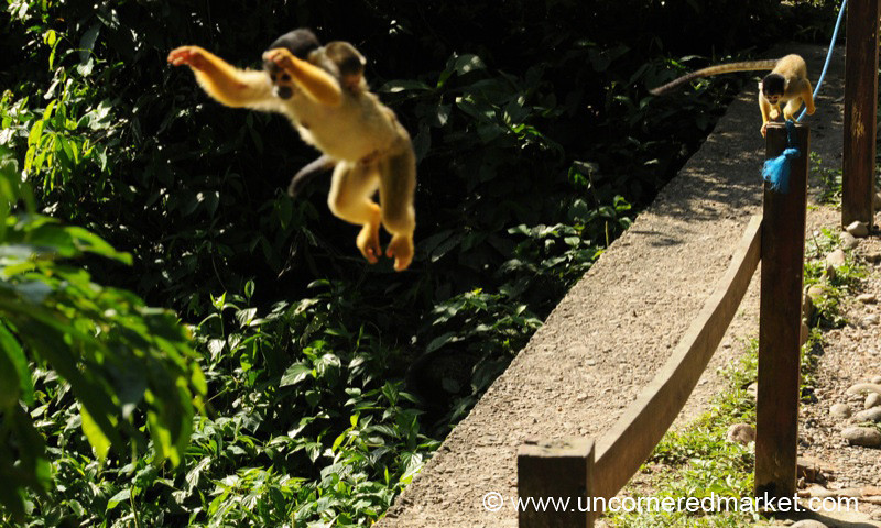 Jumping Around - Chapare, Bolivia