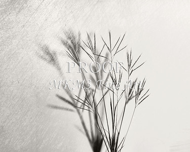 Johnson Grass in Black and White
