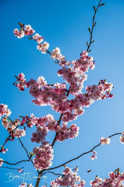 Spring blossom-2105.jpg
