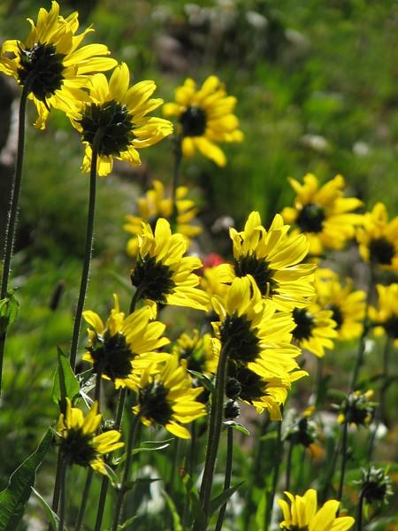 amh FLOWERS (1276).jpg