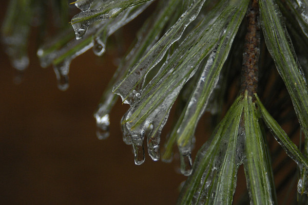 Ice Storm - 1-7-09 - 5 Photos Only