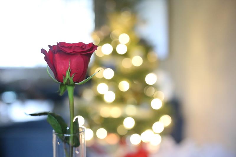 2019-12-22_ChristmasDecor-4459.JPG