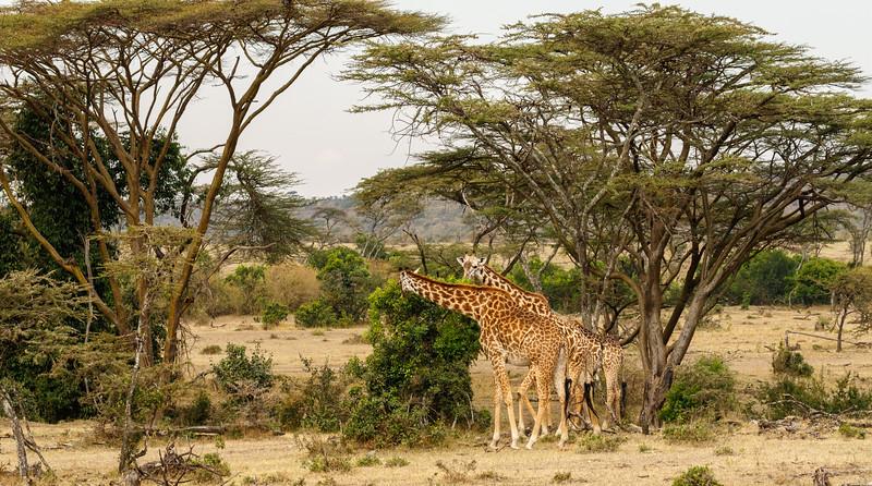 Kenya 2015-10001.jpg