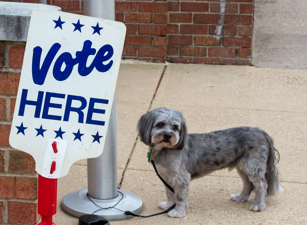 . A dog is tied up outside the polling station as its owner votes November 4, 2014 the Lyles-Crouch Traditional Academy in Alexandria, Virginia, shortly after the polls opened for the midterm US elections.    AFP Photo/Paul J.  RICHARDS/AFP/Getty Images