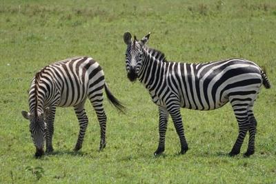 1494239973African-Safari-39.jpg