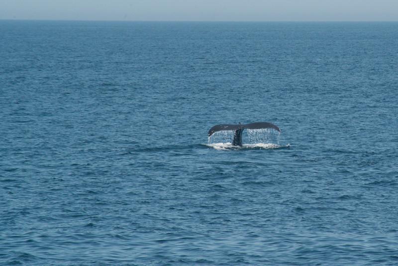 humpbacks-4153.jpg