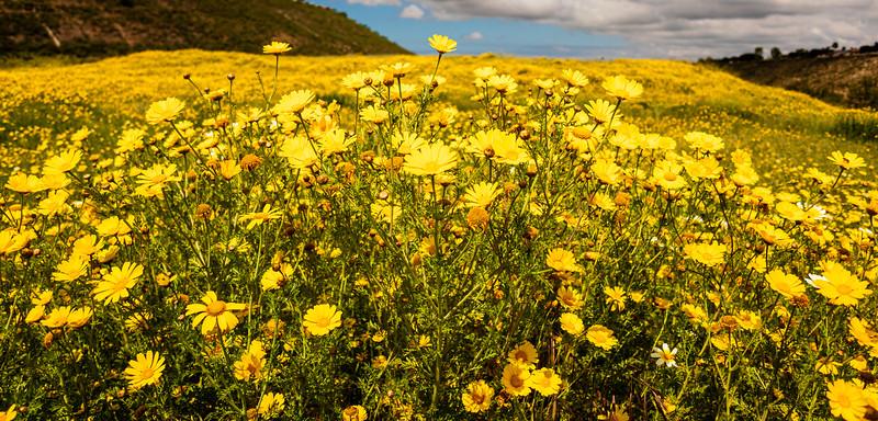 Aliso Viejo, Orange County, California, United States