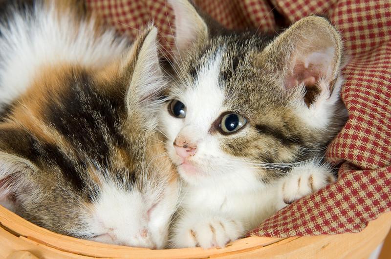 Kittens resting inside of a basket