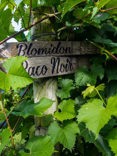 Blomidon Estates baco noir 2.jpg