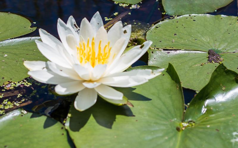 Lowes Lake-9101.jpg