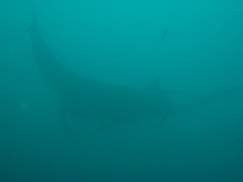 Diving in the Galapagos (251 of 392)
